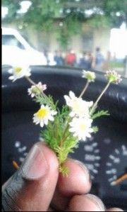 A little flower given to Pastor Raphael before he spoke at a memorial service